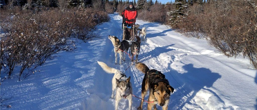 Carlton Boyce dog sledding in the Yukon.