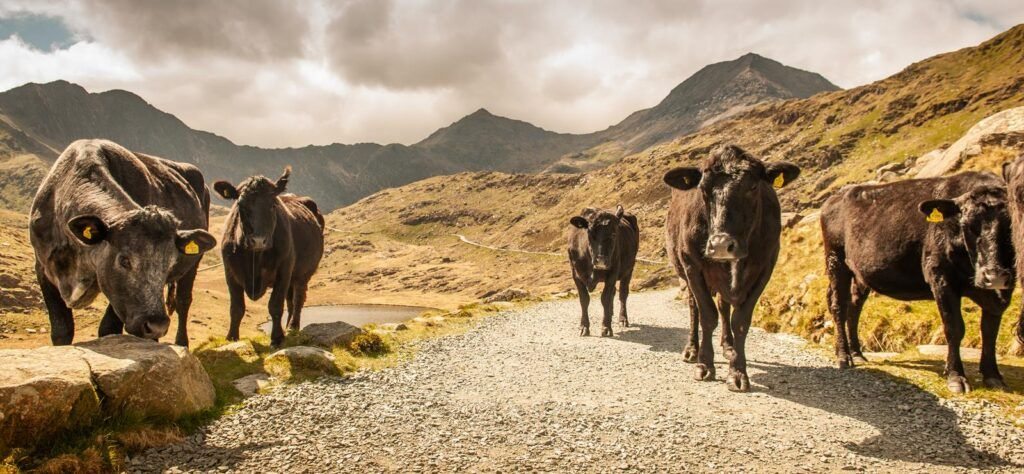 UK staycation microadventure in Wales