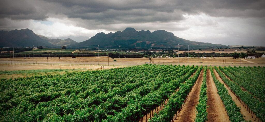 South African Fine Wine Comes of Age
